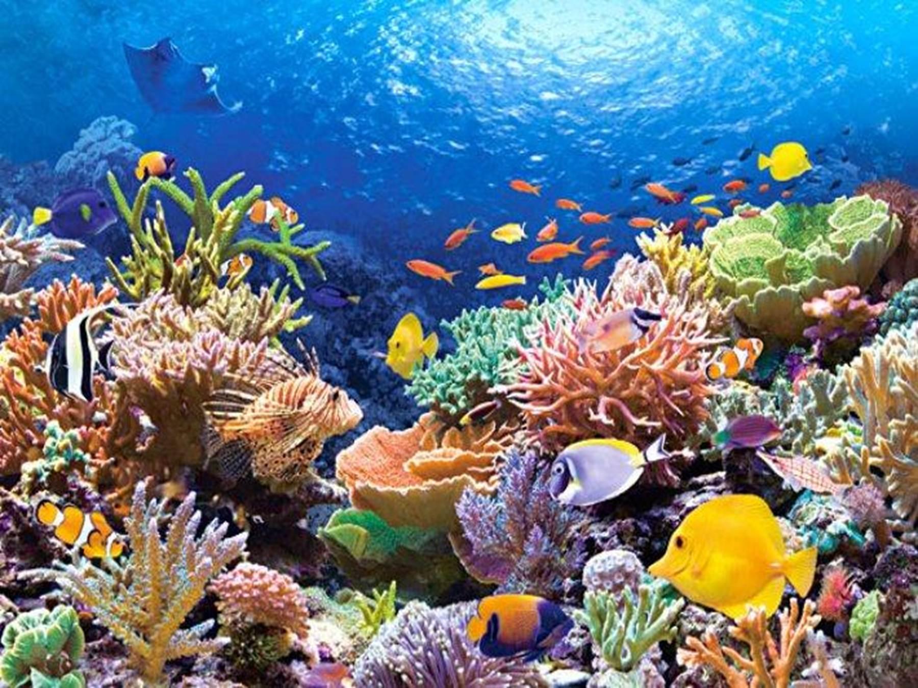 Красное море фото под водой гонок